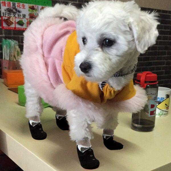 גרביים לכלב