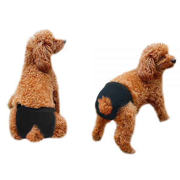 תחתונים היגייניים לכלבות