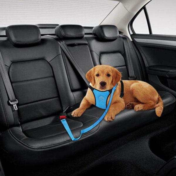 רתמה וחגורת בטיחות לרכב לכלבים