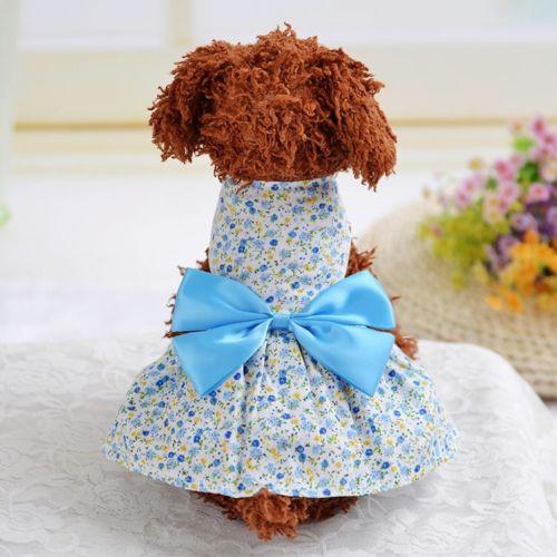 שמלת קיץ לכלבות