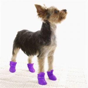 מגפיים לכלבים קטנים