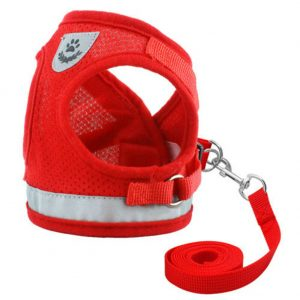 רתמה בטיחות לכלב קטן עם רצועה וחגורה לרכב