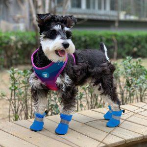 מגפיים לכלבים בינוניים