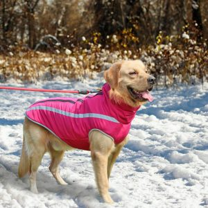 מעיל חורף לכלבים