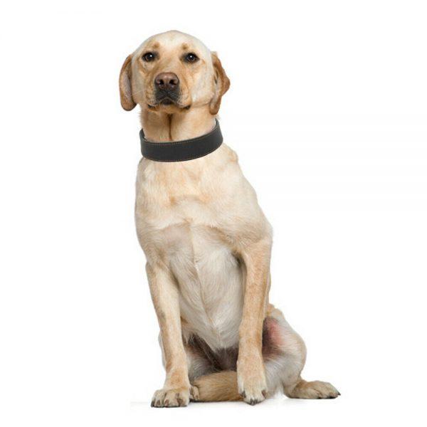 קולר מעור לכלב