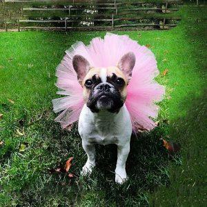 חצאית לכלבה קטנה