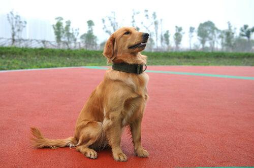 קולר לכלב גדול בצבע חאקי