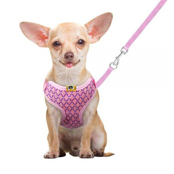 רתמה עם רצועה לכלב קטן מאוד