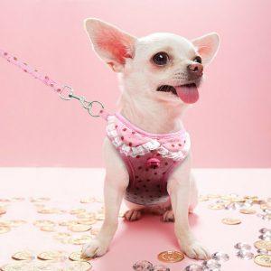 רתמה עם רצועה תות שדה לכלב קטן