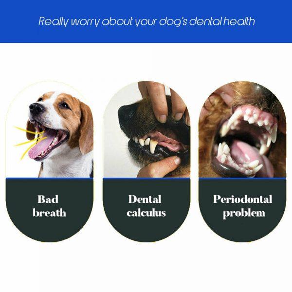 מברשת שיניים לכלבים