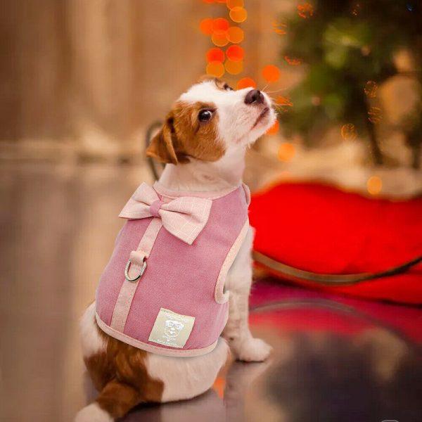 רתמה אופנתית לכלב קטן