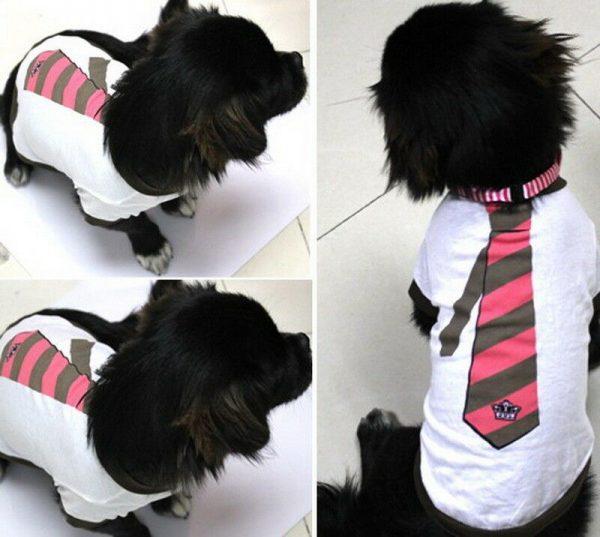 חולצת קיץ לכלבים עניבה