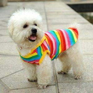 חולצת קיץ לכלבים קטנים פסים קשת