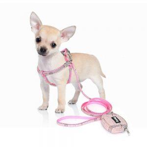 רתמה לכלב קטן עם רצועה וארנק