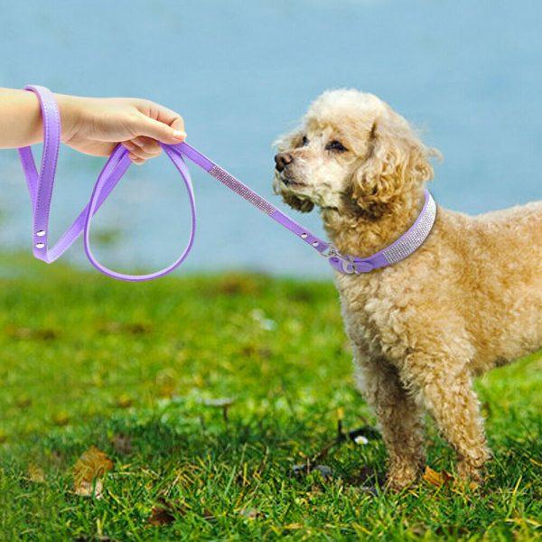 קולר ורצועה בצבע סגול לכלב קטן