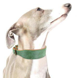 קולר לכלב מעור