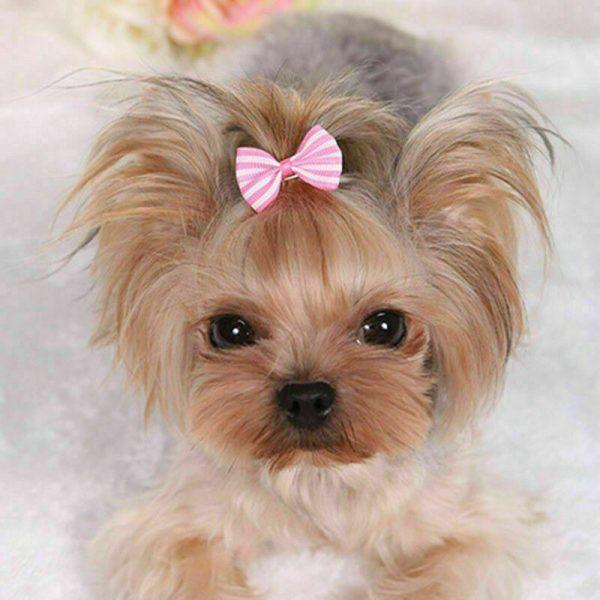 סיכות שיער צבעוניות לכלבות